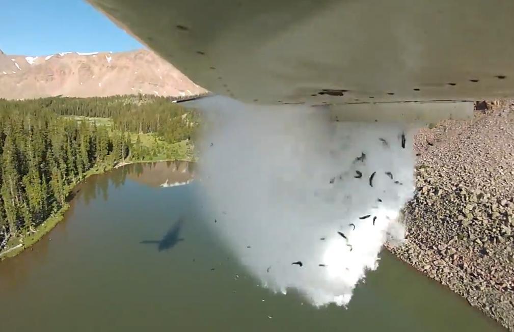 Сброс рыбы с самолета