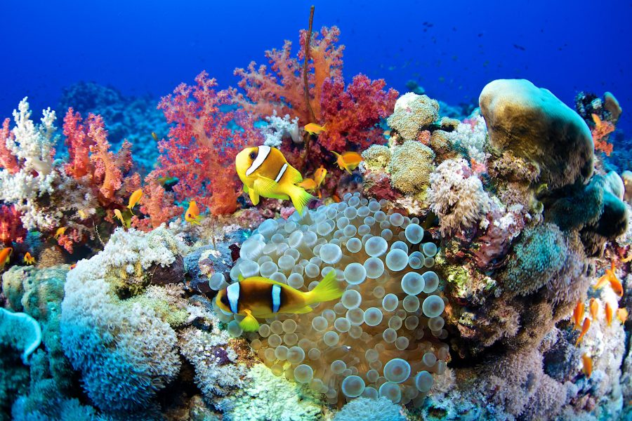 Кораллы в Египте