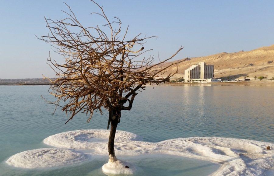 Дерево Мертвого моря