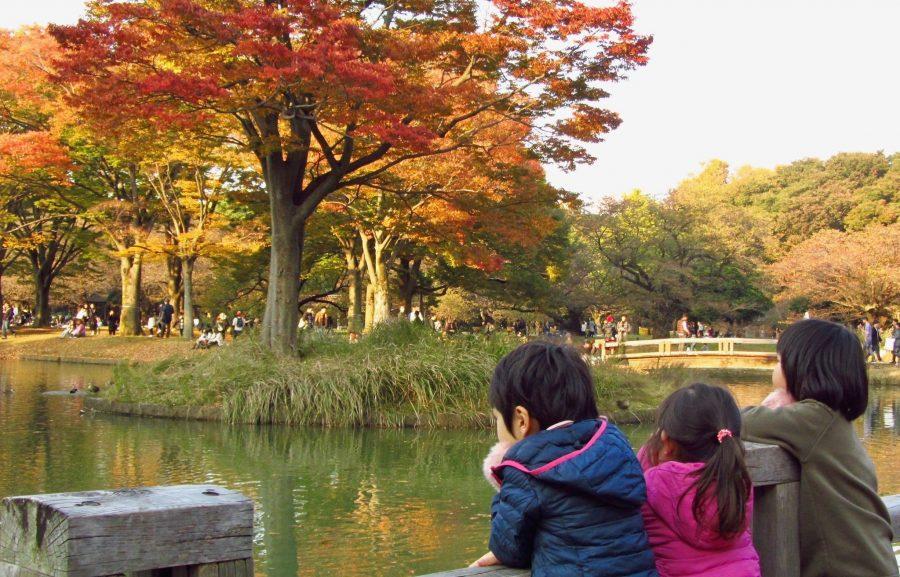 Любование природой урок в Японии