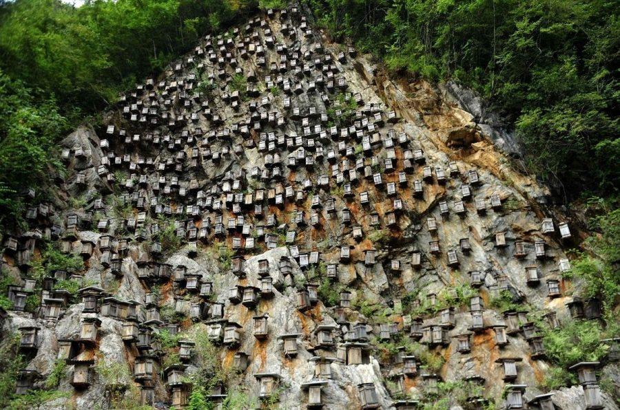 Стена ульев в Китае