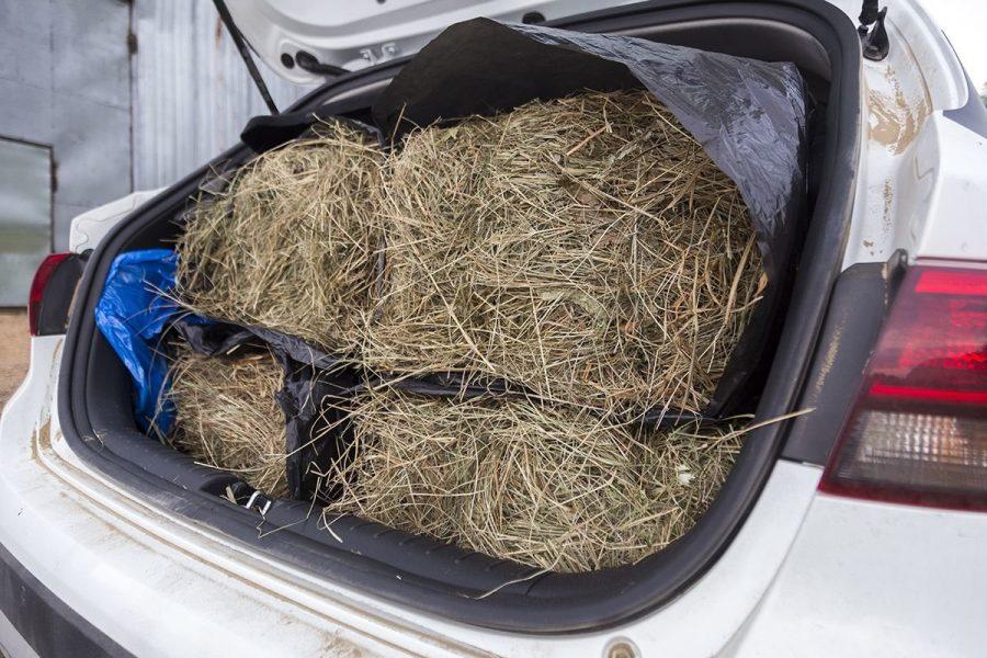 Сено в багажнике